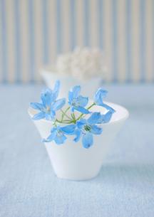 ストライプの壁バックの白い食器と青い花の写真素材 [FYI01946779]