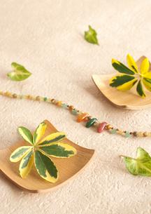 木製コースターに飾ったグリーンの葉っぱの写真素材 [FYI01946800]