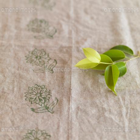 麻布の上に置いたグリーンの葉の写真素材 [FYI01946998]