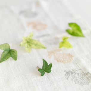 白い麻布に並べたグリーンの葉の写真素材 [FYI01947083]