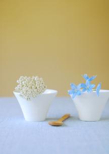 白いカップに飾った白と青い花の写真素材 [FYI01947133]