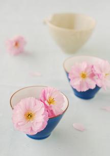 二つの青い湯のみに飾ったピンクの八重桜の写真素材 [FYI01947265]