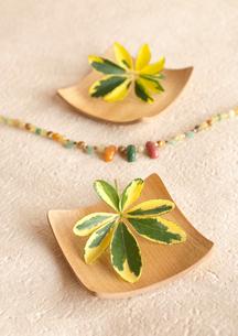 木製コースターに飾ったグリーンの葉っぱの写真素材 [FYI01947309]