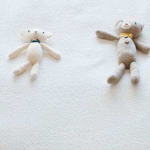 クマのぬいぐるみの写真素材 [FYI01947836]