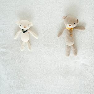 クマのぬいぐるみの写真素材 [FYI01947860]