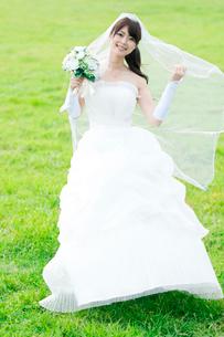 草原で微笑む花嫁の写真素材 [FYI01947875]