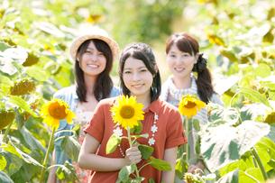 ひまわり畑で微笑む3人の女性の写真素材 [FYI01949267]
