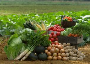 畑の前の新鮮野菜の写真素材 [FYI01949870]