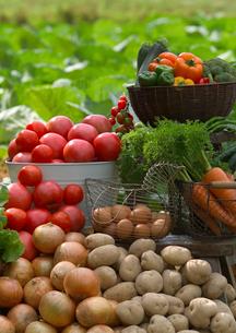 新鮮野菜いろいろの写真素材 [FYI01949875]