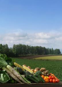 野菜と畑の風景の写真素材 [FYI01950163]