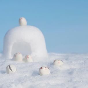かまくらの前に集まるウサギ 干支のクラフトの写真素材 [FYI01950556]