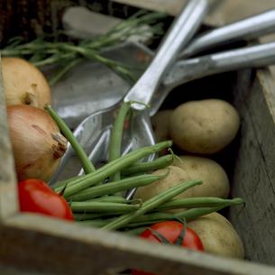 木箱の中の野菜の写真素材 [FYI01950659]