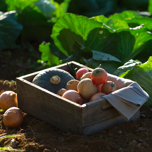 自家製農園で穫れた有機野菜の写真素材 [FYI01951257]