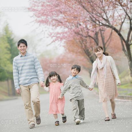 桜並木道を歩く家族の写真素材 [FYI01951307]