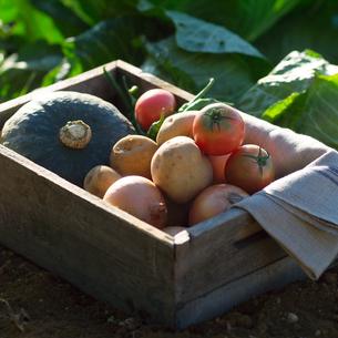自家製農園で穫れた有機野菜の写真素材 [FYI01951331]