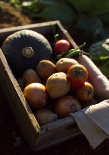 穫れたて有機野菜の写真素材 [FYI01951345]