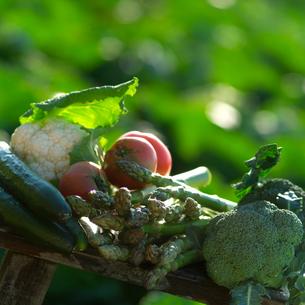自家製農園で穫れた有機野菜の写真素材 [FYI01951468]