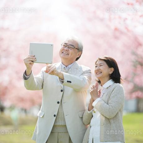 タブレットで桜の写真を撮るシニア夫婦の写真素材 [FYI01951942]