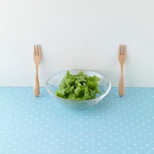 グリーンサラダの写真素材 [FYI01952006]