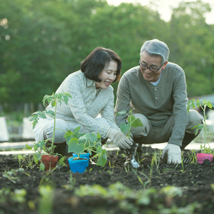 農作業をするシニア夫婦の写真素材 [FYI01952190]