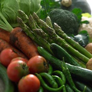 穫れたての野菜の集合の写真素材 [FYI01952416]