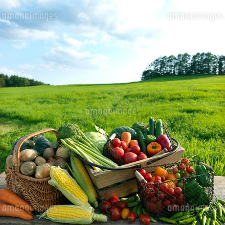 草原に並ぶたくさんの野菜の写真素材 [FYI01952517]