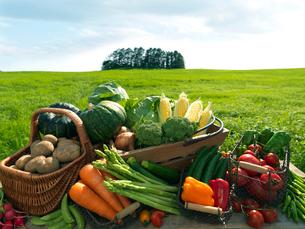 草原に並ぶたくさんの野菜の写真素材 [FYI01952661]