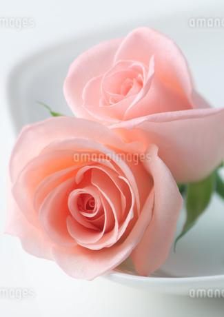 テーブルに置かれたバラの写真素材 [FYI01952730]