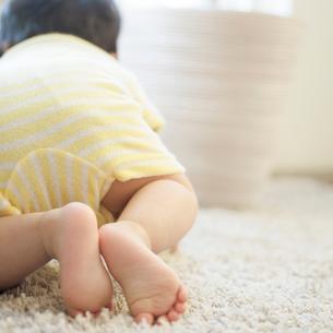ハイハイをする赤ちゃんの後姿の写真素材 [FYI01953914]