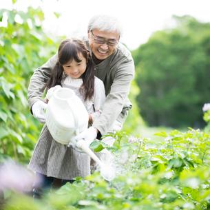 畑で水やりをする祖父と孫の写真素材 [FYI01954650]