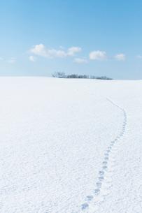 雪原に続く足跡の写真素材 [FYI01955148]