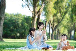 ポプラ並木でピクニックをする親子の写真素材 [FYI01955828]