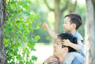 肩車で植物の観察をする親子の写真素材 [FYI01956233]