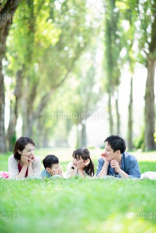 ポプラ並木で寝そべる家族の写真素材 [FYI01956238]
