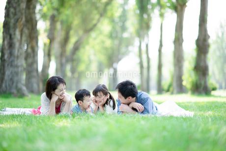 ポプラ並木で寝そべる家族の写真素材 [FYI01956494]