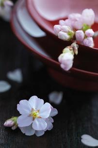 盃と桜の花の写真素材 [FYI01957338]