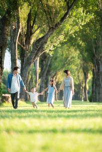 ポプラ並木を歩く家族の写真素材 [FYI01957575]