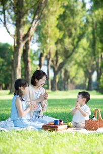 ポプラ並木でピクニックをする親子の写真素材 [FYI01957598]