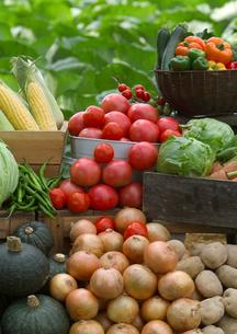 新鮮野菜いろいろの写真素材 [FYI01957661]