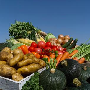 新鮮野菜と青空の写真素材 [FYI01958100]
