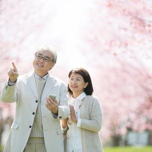 スマートフォンを持ち桜を眺めるシニア夫婦の写真素材 [FYI01958192]