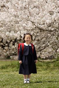 桜とランドセルを背負った女の子の写真素材 [FYI01959422]