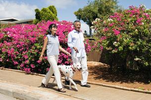 犬の散歩をするシニア夫婦の写真素材 [FYI01960157]