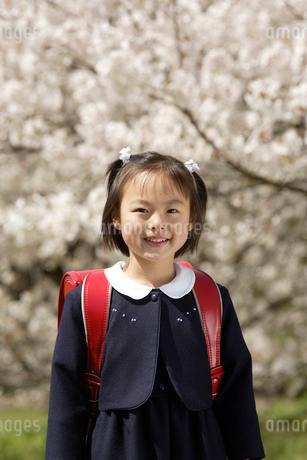 桜とランドセルを背負った女の子の写真素材 [FYI01960495]
