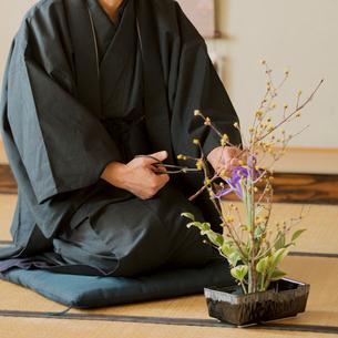 生け花をするシニア男性の写真素材 [FYI01960953]