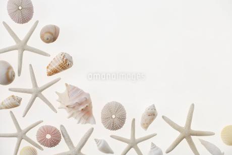 貝殻とヒトデの写真素材 [FYI01961119]