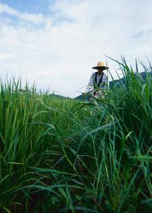 草刈りをする男性の写真素材 [FYI01962488]