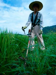 草刈りをする男性の写真素材 [FYI01962543]
