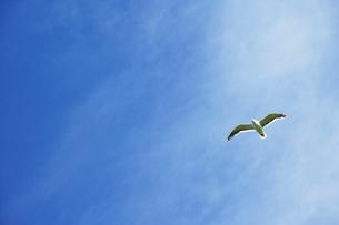 空を飛ぶカモメの写真素材 [FYI01962598]