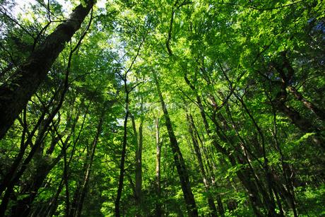 初夏の森林の写真素材 [FYI01963737]